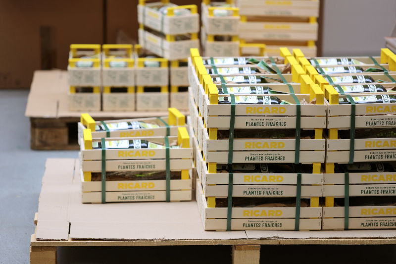 Ricard Plantes Fraîches palette