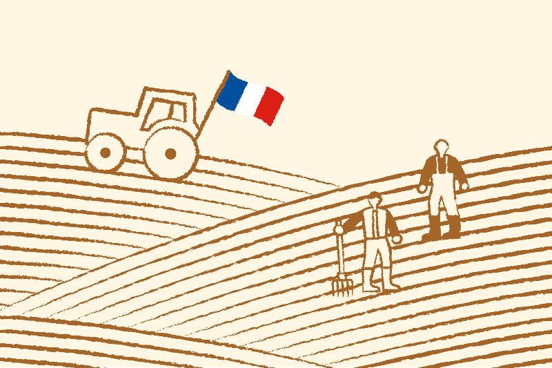 jacquet, identité de marque, argiculteurs, illustration, design by 5.5