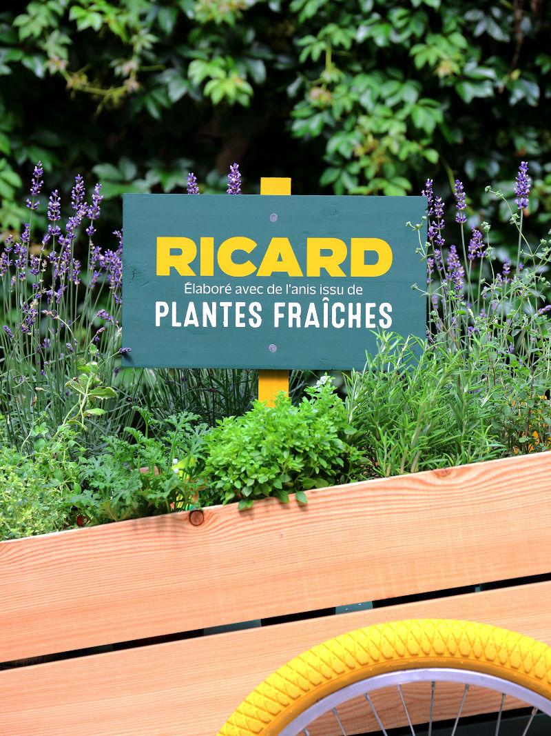 Ricard plantes fraîches pastis abeille fenouil Provence Valensole